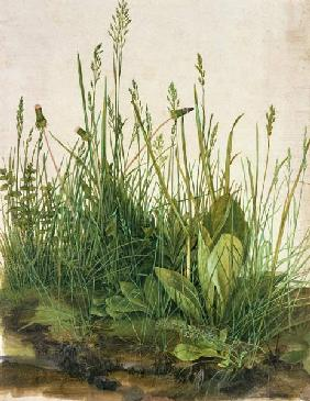 Great piece of turf - study of weeds