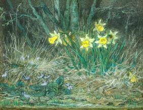 Narcissi and Violets