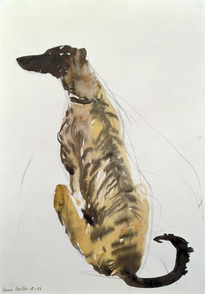 Lurcher Sitting, 1988 (charcoal and w/c on paper)